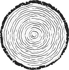 tree ring clip vector images illustrations istock