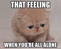 All Alone Meme - that feeling when you re all alone super sad cat meme generator