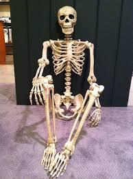 Life Size Posable Skeleton Halloween 6 Wire Life Size Posable Skeleton Pictures To Pin On Pinterest