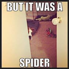 Perhaps Meme - 48 best doglover images on pinterest funny animals ha ha and