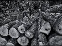 sebastião salgado has seen the forest now he u0027s seeing the trees