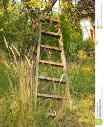 Overgrown Garden Old Wooden Ladder Leaning Against The Apple Tree Stock Photo