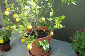Indoor Container Gardening - the 16 best healthy edible plants to grow indoors greatist