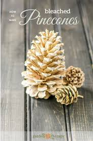how to make gorgeous bleached pinecones pinecone pine cone and