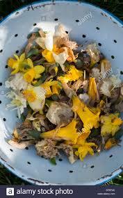 secateur de cuisine dead daffodil flower stock photos dead daffodil flower stock