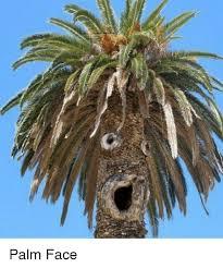 Palm Face Meme - 25 best memes about palm face palm face memes