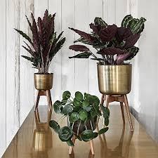 Indoor Plant Vases Indoor Plant Pots Unusual Vases Audenza