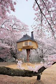 cool tree houses amazing cool awesome tree houses
