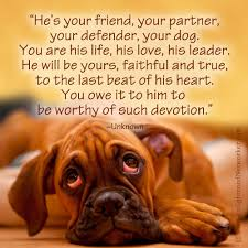 boxer dog kills man one of my favorite dog quotes quotes dogs boxers favorite