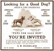 american pit bull terrier website american pit bull terrier art for sale