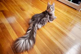 guinness records include long tailed cat old bodybuilder