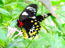 this colourful butterfly was to catch as it did not land