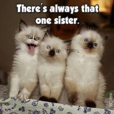 Sassy Cat Meme - pin by james ray givens on my cats and yours a mind of their own