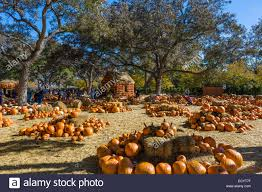 the pumpkin village in the fall dallas arboretum and botanical