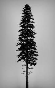best 25 tree silhouette ideas on forearm tree