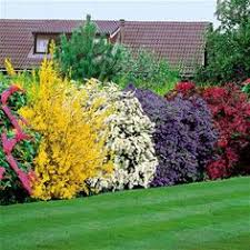 All Year Flowering Shrubs - top 10 flowers that bloom all year gardens 10 and pink