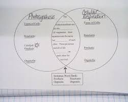 how does the equations for cellular respiration and photosynthesis talkchannels