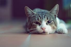 wallpaper cat ahdzbook wp e journal