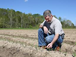 lull in spring rains helps corn planting mississippi state