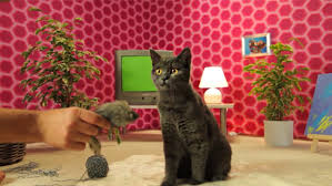 Cats In Small Spaces Video - corporate videos films ads and commercials magdeburg germany