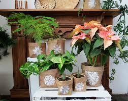 plants for the house how to dress up your plants for christmas ohoh blog
