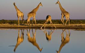the best places to see giraffes in africa