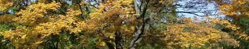 wisconsin woody ornamentals program