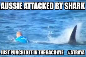 Shark Attack Meme - aussie attacked by shark mick fanning shark attack know your meme