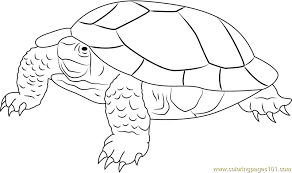 angry turtle coloring free turtle coloring pages