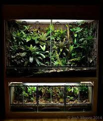 448 best terrarium goals images on pinterest reptiles reptile