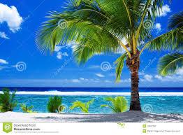 single palm tree overlooking amazing lagoon stock photography