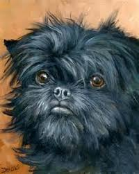 affenpinscher terrier mix the 10 smallest dog breeds in existence a love activities and other