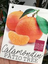 patio fruit trees spencer u0027s produce lawn u0026 garden centers inc