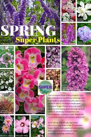 plants native to louisiana 24 best super plants spring images on pinterest louisiana lsu