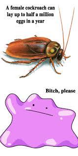 Flying Cockroach Meme - ditto eggs pokémon know your meme