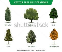 different tree sorts names illustrations tree stock vector 497943913