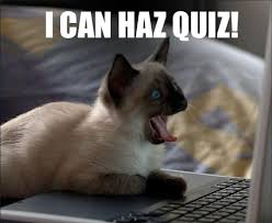 Success Cat Meme - weekly quiz whose cat is this one nation concerts tour news