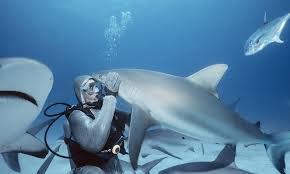 poking sharks u0027 eyes and noses poking sharks u0027 eyes and noses