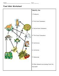 food chain worksheet 3rd grade free worksheets library download
