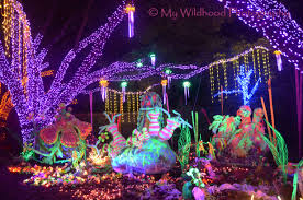 Christmas Lights At Houston Zoo by Zoo Lights My Wildhood