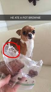 High Dog Meme - dog s living the high life dogvirals com funny dog pics videos