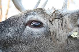 deer attitudes and setting guideline for relaxed