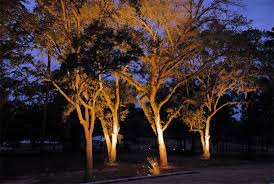 illuminate your backyard and garden with outdoor tree lights