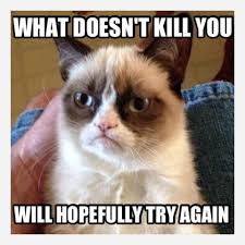 Angry Cat Good Meme - how grumpy cat became a movie that s actually pretty good grumpy
