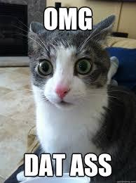 Dat Ass Cat Meme - omg dat ass sudden clarity cat quickmeme
