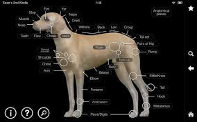 Anatomy Videos Free Download Dog Anatomy Canine 3d Android Apps On Google Play