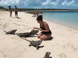 while on vacation we visited a island full of friendly iguanas
