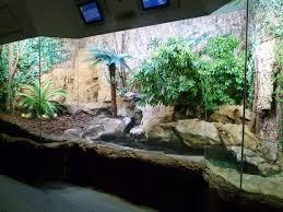 desert terrarium google search aquariums pinterest