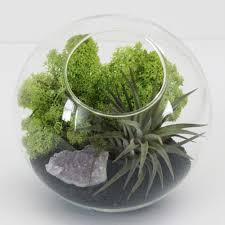 indoor succulent planters bomets