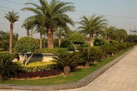 landscaping services landscape designing services in vasant